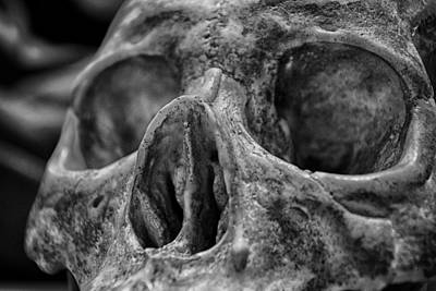 Photograph - Skull - 3 by Nicholas Evans