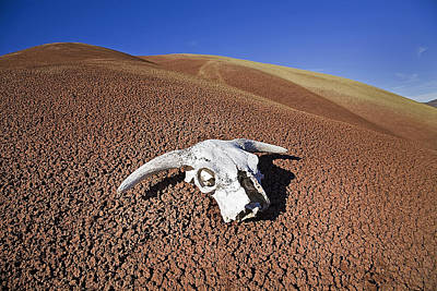 Dinosaur Photograph - Skull At The Fossil Beds by Buddy Mays