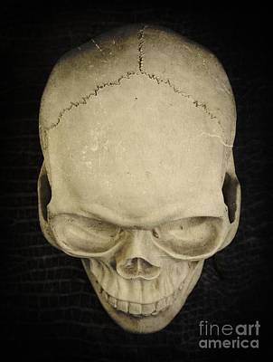 Photograph - Skull by Edward Fielding