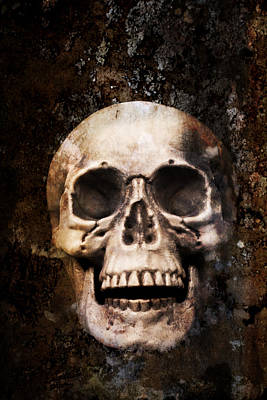 Photograph - Skull In Earth by Amanda Elwell
