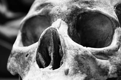 Photograph - Skull by Nicholas Evans