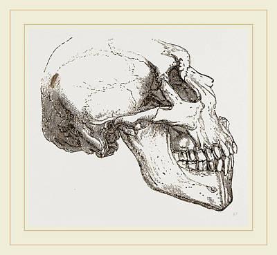 Human Skull Drawing - Skull Of Human Idiot by Litz Collection