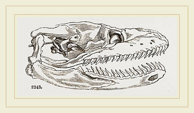 Python Drawing - Skull Of Python by Litz Collection