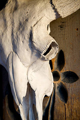 Photograph - Skull On Door by Mary Lee Dereske