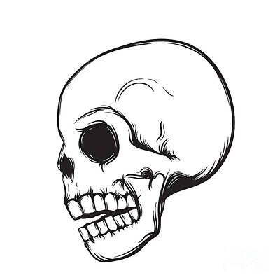 Gothic Wall Art - Digital Art - Skull, Side View, Isolated On White by Nexusby