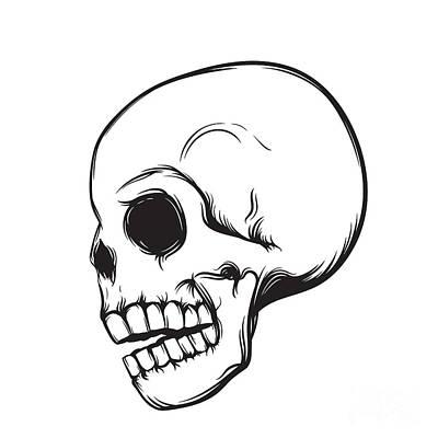 Bone Wall Art - Digital Art - Skull, Side View, Isolated On White by Nexusby