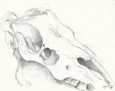 Messy Drawing - Skull Study 1 by Melinda Dare Benfield