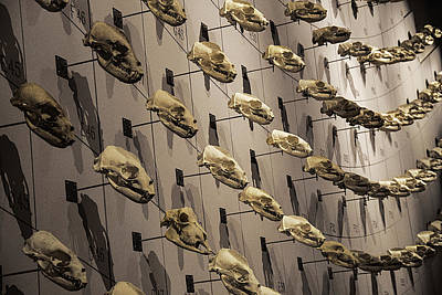 Photograph - Skull Wall by Garry Gay