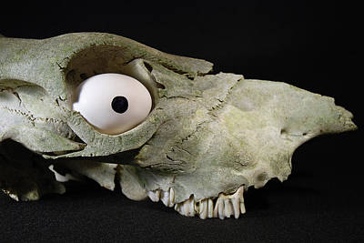 Photograph - Skulls Eye by Kjirsten Collier