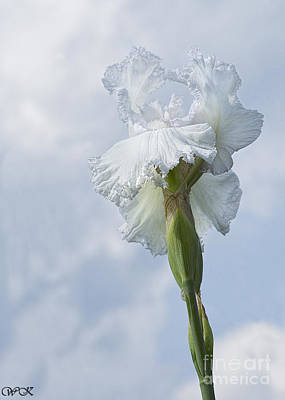 Photograph - Sky And White Iris by Wanda Krack