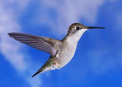 Photograph - Sky Blue Flyer 2 by Leda Robertson