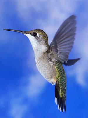 Photograph - Sky Blue Flyer by Leda Robertson
