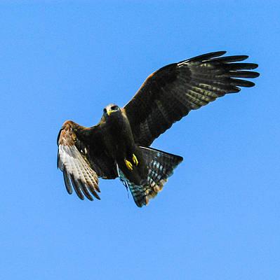 Photograph - Sky Boss by Alistair Lyne