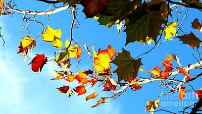 Fall Photograph - Sky Fiesta by Samantha Glaze