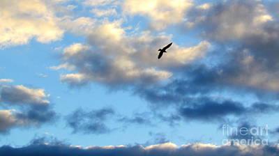 Photograph - Sky Fly 10 by France Laliberte
