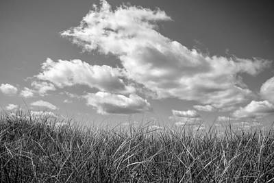 Photograph - Sky Grass by Frank Winters