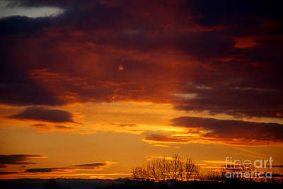 Photograph - Sky Of Orange by Mark Dodd