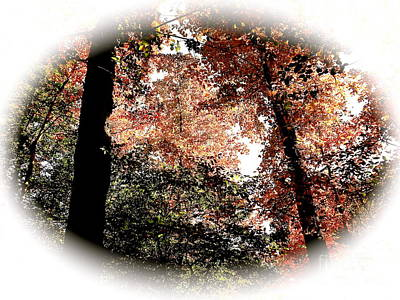 Photograph - Sky Through Fall Trees by John Potts