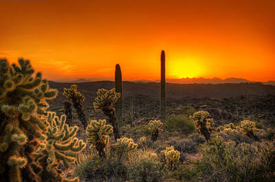 Photograph - Skyfire Cholla by Anthony Citro