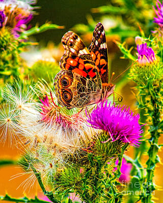 Photograph - Skyline Butterfly by Nick Zelinsky