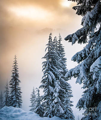 Winter Light Photograph - Skyline Lake Forest - January by Inge Johnsson