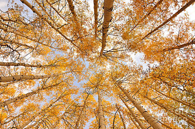 Photograph - Skyward Gold by Kelly Black