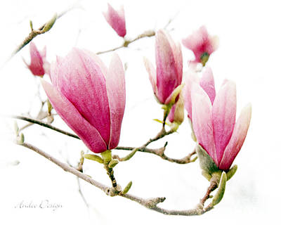 Photograph - Skyward Magnolia Painterly 1 by Andee Design