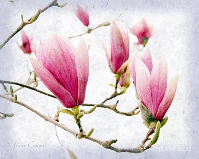 Photograph - Skyward Magnolia Painterly 2 by Andee Design