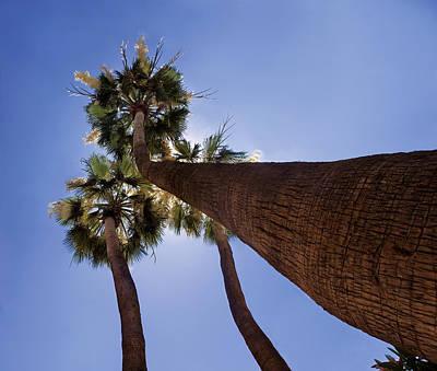 Photograph - Skyward Palms by Dave Dilli