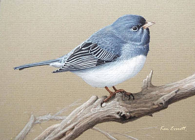 Slate Painting - Slate-colored Junco Study by Ken Everett