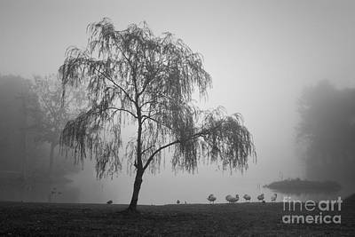 Photograph - Slater Park Landscape No. 1 Bw by Dave Gordon