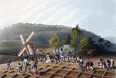Slaves Planting Sugar Cane, 19th Century Print by British Library