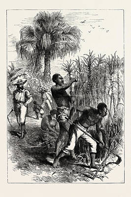 Plantation Drawing - Slaves Working On A Plantation, United States Of America by American School