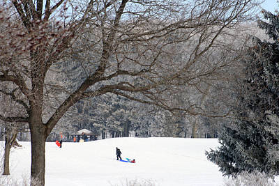 Photograph - Sledding At Petrifying Springs Park by Kay Novy