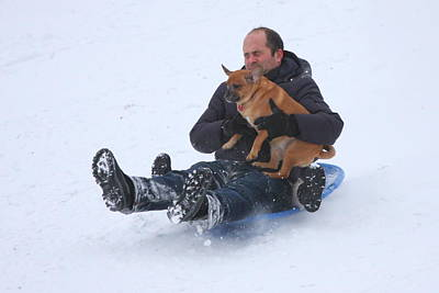 Photograph - Sledding With Pup by Anne Barkley