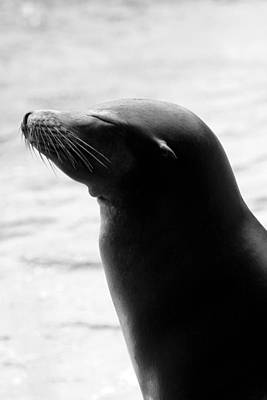 Photograph - Sleek Sunbather In Black And White by Angela Rath