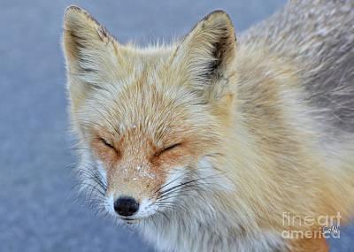Photograph - Sleep Walking by Sami Martin
