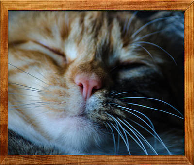Photograph - Sleeping Abby Framed by Tikvah's Hope
