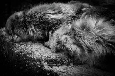 Fury Photograph - Sleeping by Akihiro Shibata