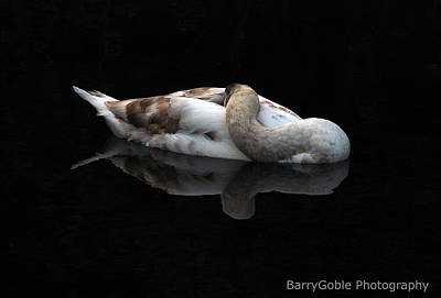 Reflectivity Photograph - Sleeping Beauty by Barry Goble