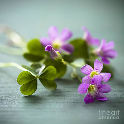 Sorrel Photograph - Sleeping Beauty Wild Flower by Jan Bickerton