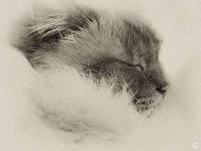Sleeping Birma Print by Gun Legler