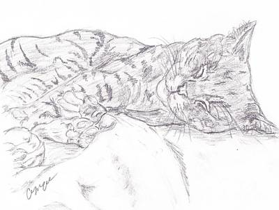Gray Tabby Drawing - Sleeping Cat by Caitlin  Wells