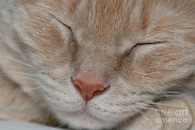 Sleeping Cat Face Closeup Art Print