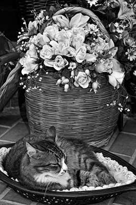 Town Photograph - Sleeping Cat In Mytilini by George Atsametakis