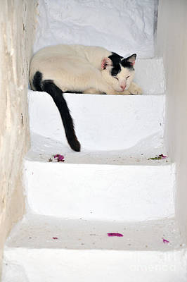 Photograph - Sleeping Cat In Serifos Town by George Atsametakis