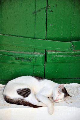 Photograph - Sleeping Cat In Sifnos Island by George Atsametakis