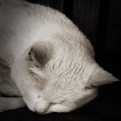 Pussycat Photograph - Sleeping Cat by Martin Newman