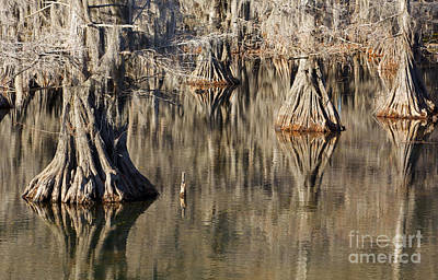 Photograph - Sleeping Cypress by David Lee