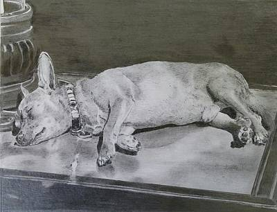 Still Life Drawings - Sleeping dog #1 by Mike  Amato